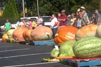 Growers stand with their giant gourds awaiting weigh-in during the 49th annual Spring Hope National Pumpkin Festival on Saturday.