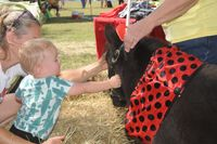 Dressed as a ladybug, Gracie from Helping Horse Therapeutic Riding receives pats from children during Saturday's Harvest Festival in Wendell.