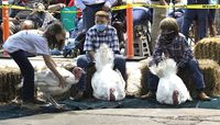 Market turkey competitor Reagan Tew, left, controls her turkey on Thursday as Tuck Webb of Saratoga and Carson Walker, middle, wait for their gobblers to be judged at the N.C. State Fair.