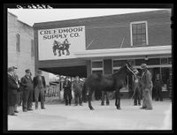 A mule is auctioned off in Creedmoor in this undated photo.