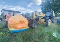 Danny Vester of Spring Hope oversees his giant pumpkin being rigged out of the patch and onto a pallet. The pallet and pumpkin were then lifted onto a flatbed truck by crane and rigging company Edwards, Inc. The next morning, the pumpkin made the trip to Knoxville, Tennessee, for the Tennessee Valley Fair where it weighed in at 1,390 pounds.